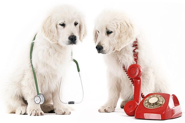 Mikor kell azonnal állatorvos fordulni?