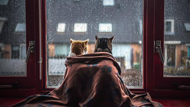 benti életmódot folytató macska az ablak előtt