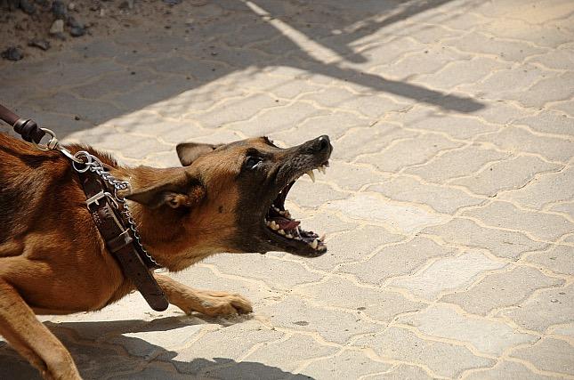 agresszív kutya által okozott harapott sérülés