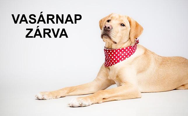 az állatorvosi rendelő vasárnap zárva