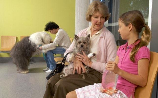 váróteremben különítsük el az állatokat egymástól és legyünk türelmesek