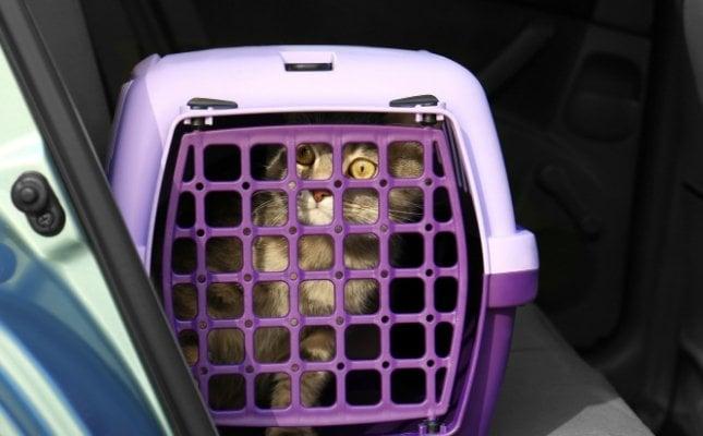 a cicákat jól zárható szállítódobozban kell tartani