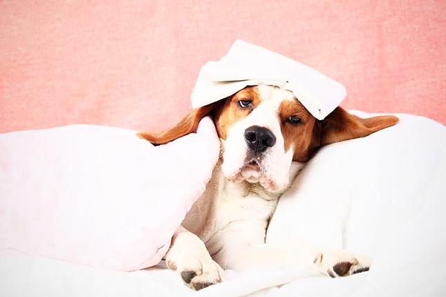 Ha már beteg a kutya