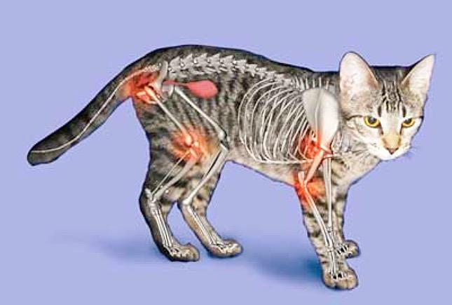 Cica arthritis