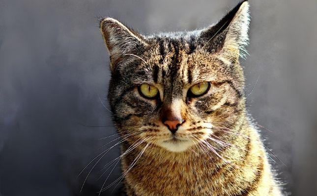 Idős cicák betegségei