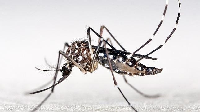 szúnyogok terjesztik a betegséget