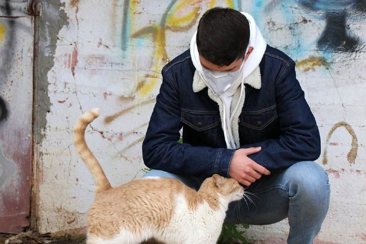 Ember és macska