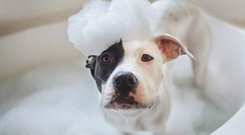 környezeti allergia kutyáknál
