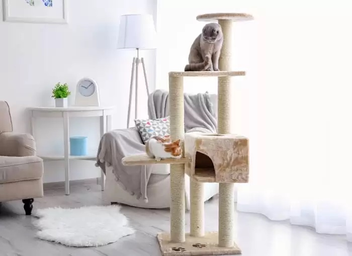 hízásra való hajlam a benti cicáknál