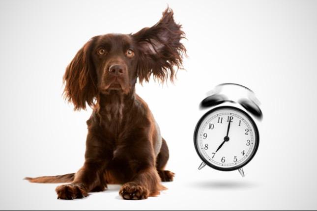 időpontegyeztetéses rendelés