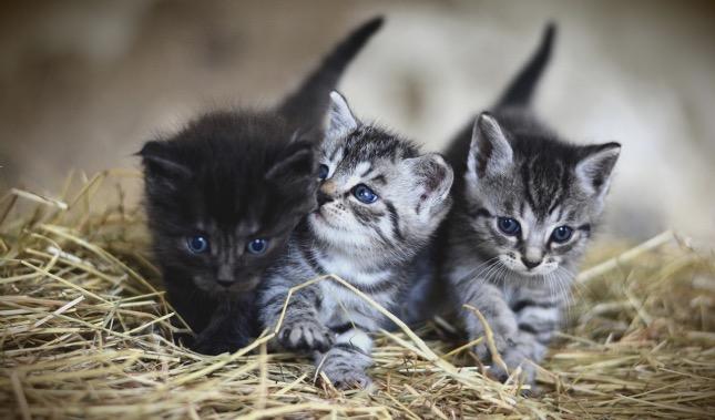 kiscicák együtt tartva