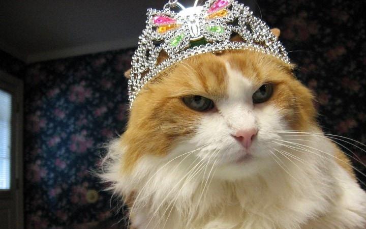 A macskák is elkaphatják a Korona vírust