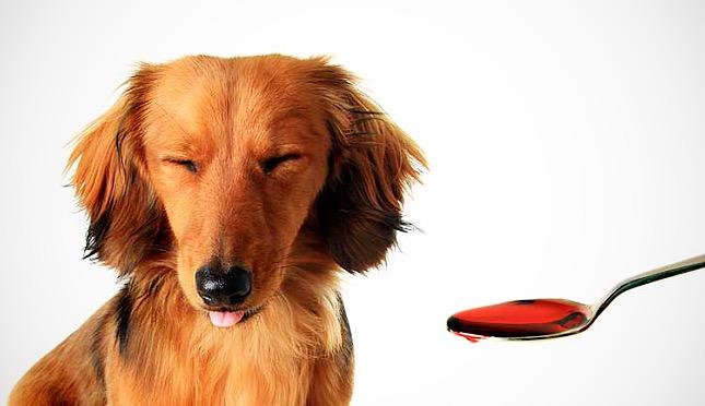 Kutyák számára mérgező gyógyszerek