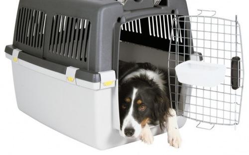 Kutya szállítása Budapesten és vidéken