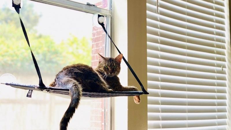 calm tápok macskáknak