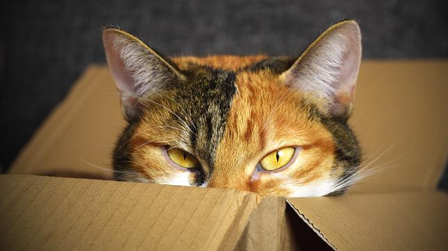 a macskák szívesen bújnak el dobozokban