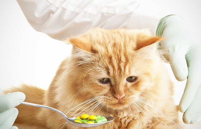 Macskák számára veszélyes gyógyszerek