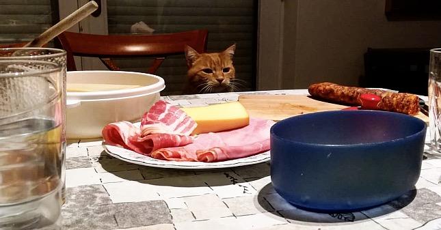 macskák étrendje