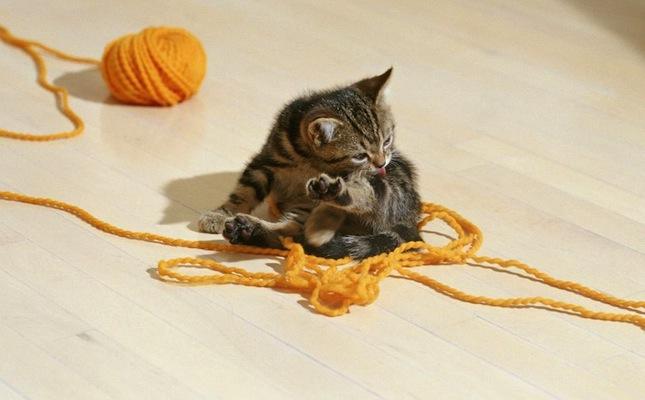 Cica játék közben