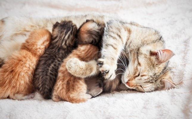 mikor kell oltani a macskákat