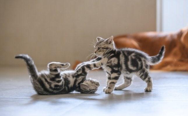 macskanátha, calivírus, veszettség - csak pár veszély amit megelőzhetünk egy oltással