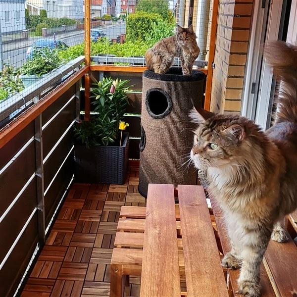 erkély biztosítása hálóval