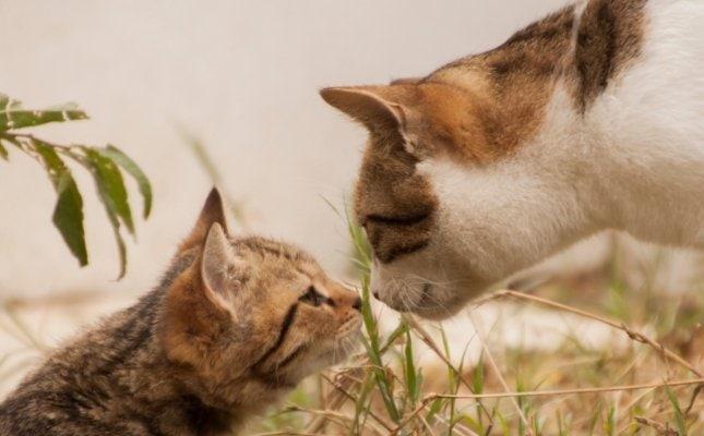a hosszú és boldog cica élet egyik titka a kötelező oltások rendszeres beadatása