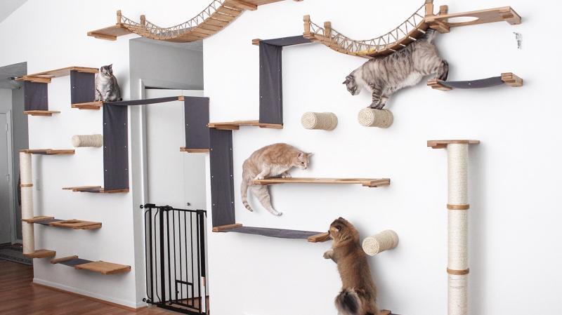 lakásban tartott macska