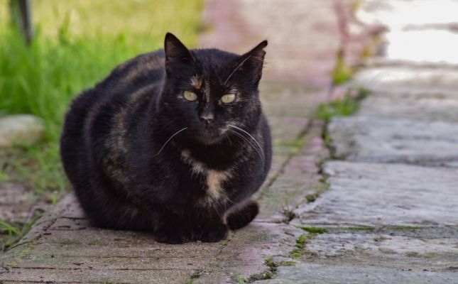 Öreg macskák geriátriai kivizsgálása akciósan