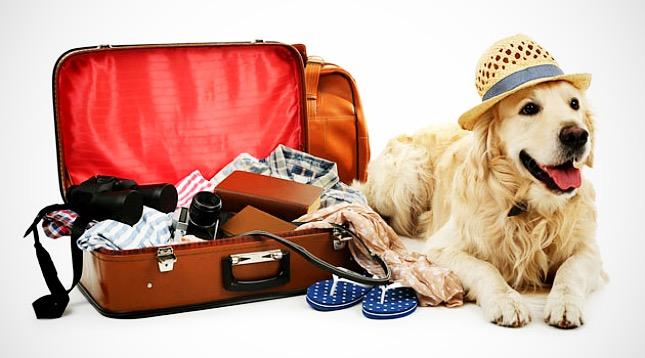 utazásra készen és felkészülten - bepakolva