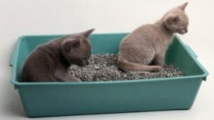Macska húgykövesség és húgyhólyag gyulladás
