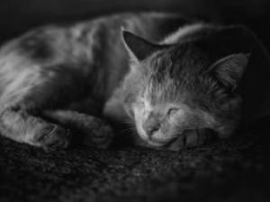 Idős cicák TOP 9 betegsége