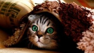 Macska tartása lakásban - ezekre figyelj oda!