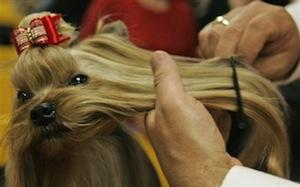 Kutya és macska kozmetikai tanácsok