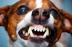Kutyaharapás, macskaharapás, veszettség - mennyire kell félni tőle?