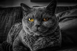 Macska tartásmódok