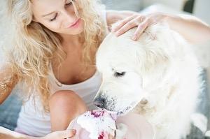 Kutyák számára mérgező finomságaink