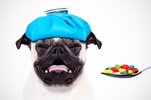 Mérgező otthoni gyógyszerek kutyáknak és cicáknak 1. rész