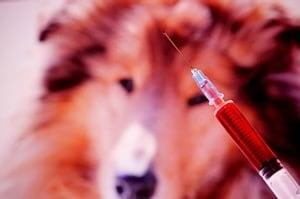 Antibiotikum rezisztencia, ne adjunk esélyt a baktériumoknak!