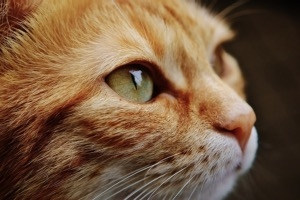 Kipirult szemek avagy mikor kell állatorvoshoz fordulni?