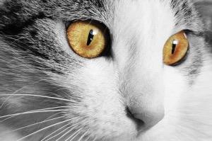 A macskák titkai