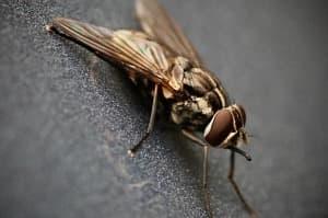 Legyekről és szúnyogokról