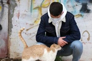 Kutyák, macskák és egyéb állatfajok a koronavírus járvány tükrében